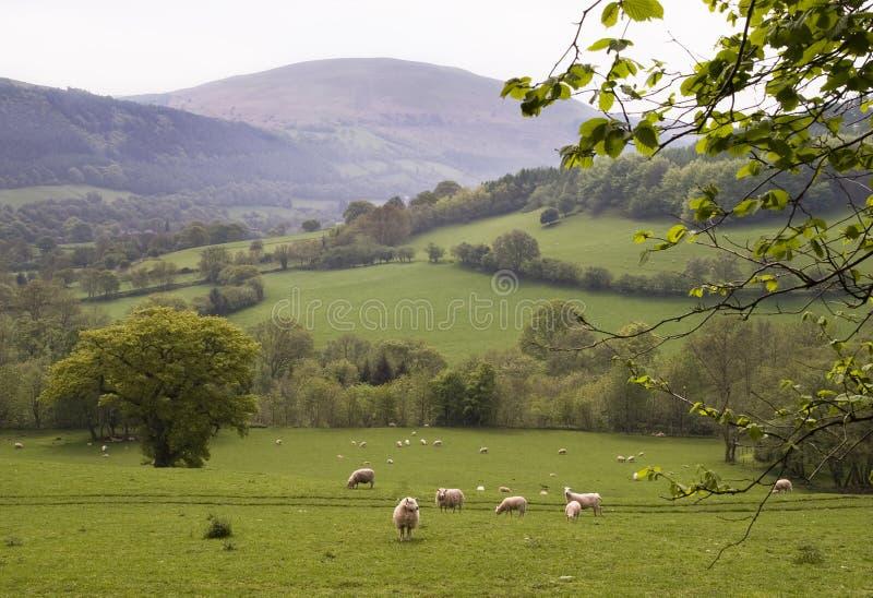 乡下威尔士 免版税图库摄影