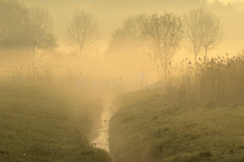 乡下有雾的场面 库存图片