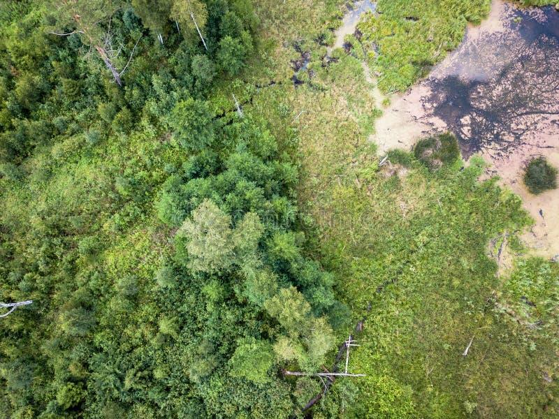 乡下森林的空中寄生虫照片,冠上在S的看法下 库存照片