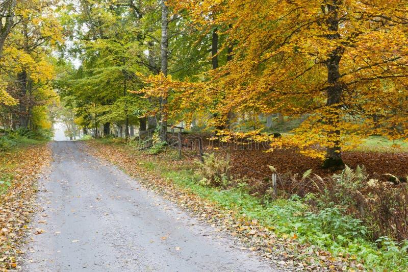 乡下漫长的路 库存图片