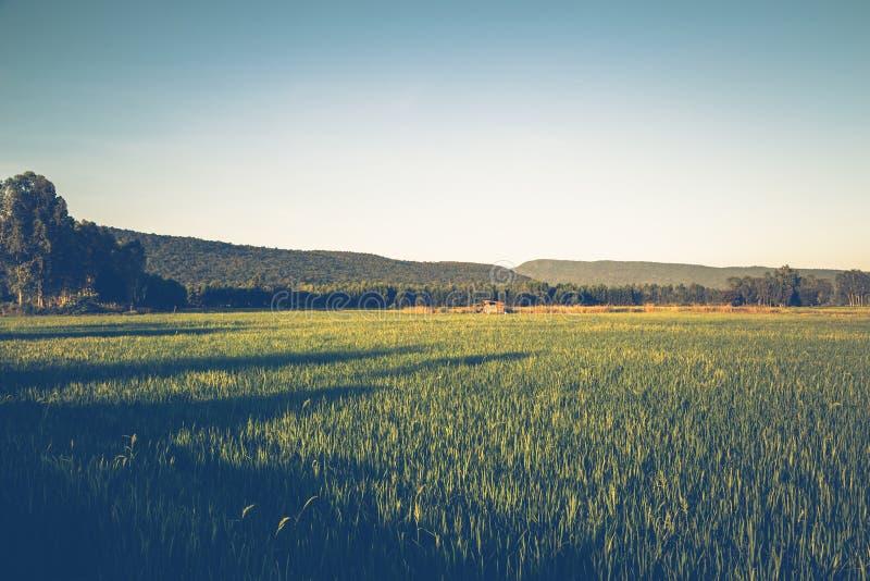 乡下米领域 图库摄影