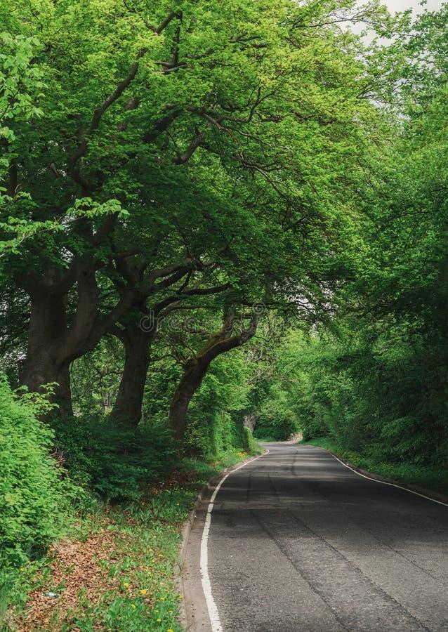 乡下路和大树 免版税库存图片