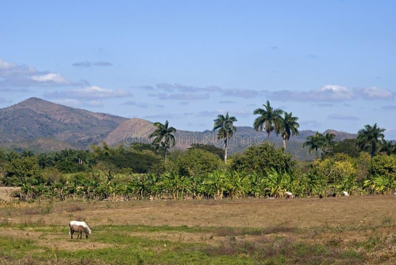 乡下, Ingenios的谷,古巴 免版税图库摄影