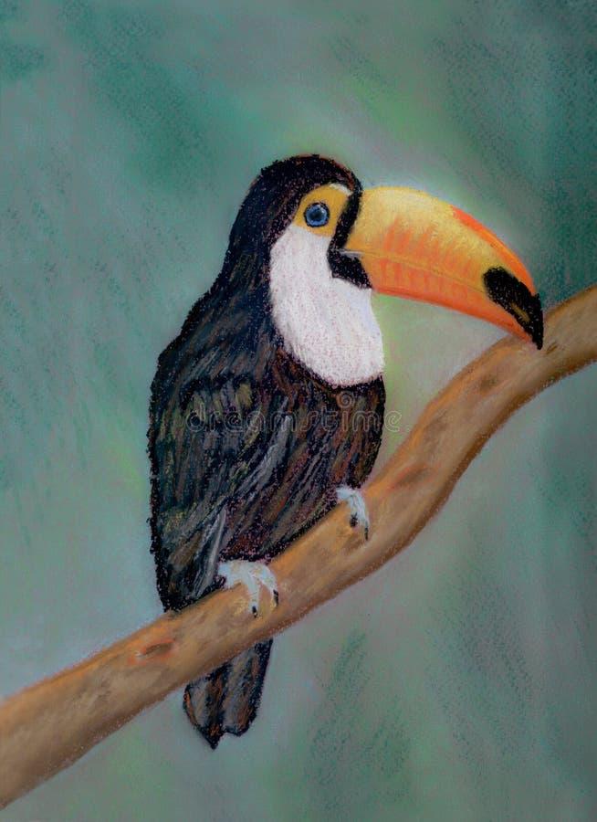 书刊上的图片一toucan在树枝,画与在纸的软的柔和的淡色彩 向量例证