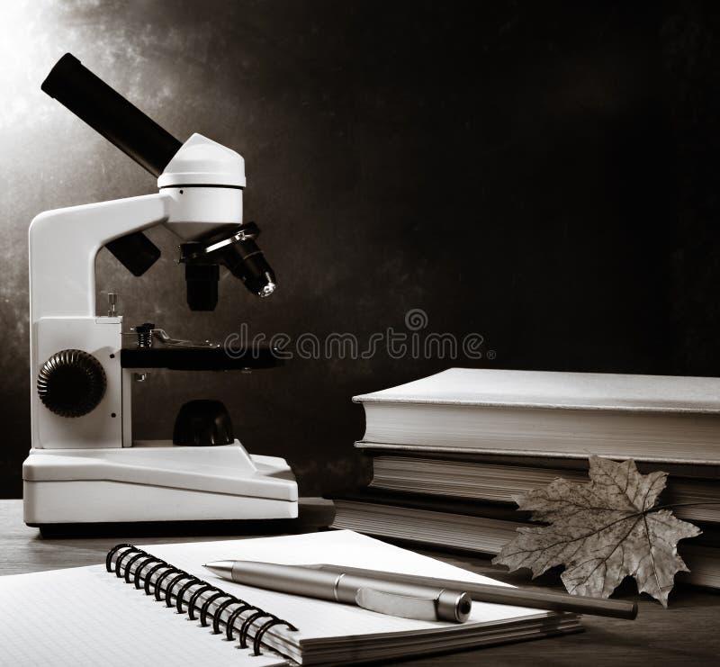 书叶子槭树显微镜 免版税图库摄影