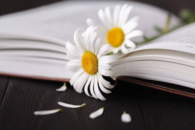 书和daisie花在木桌上 免版税库存图片