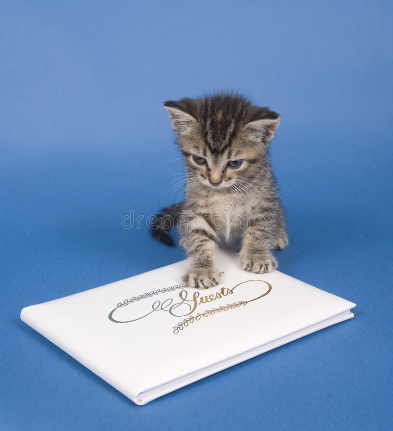 书客户小猫 免版税库存照片