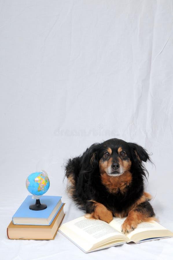 读书狗 库存图片