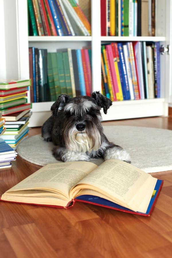 读书的狗 免版税库存图片