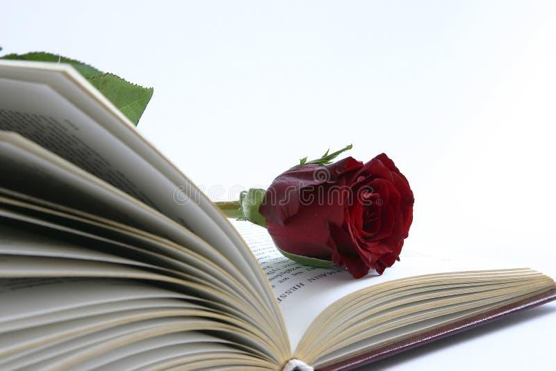 书红色上升了 库存照片