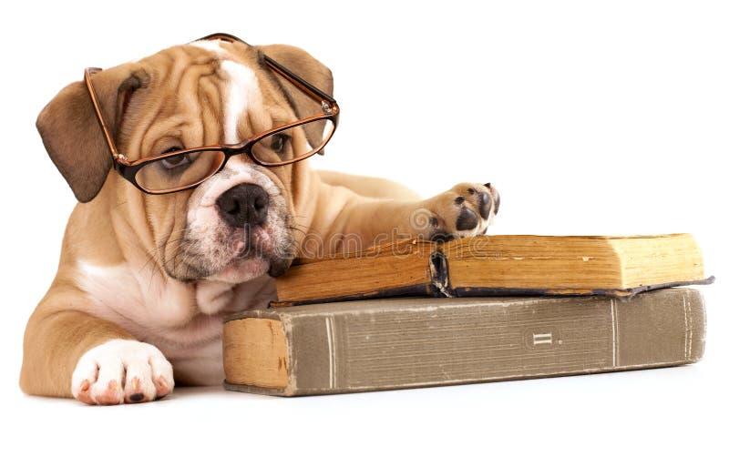 书被培训的狗玻璃 免版税库存照片