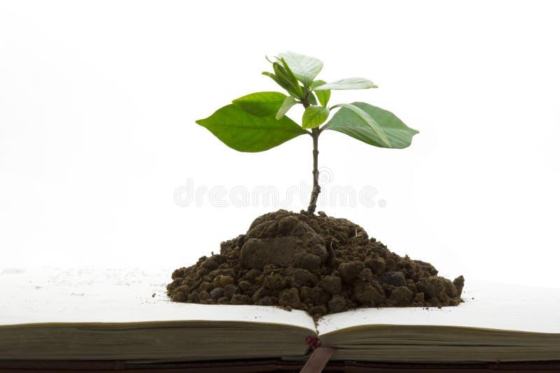 书绿色增长工厂 免版税库存图片