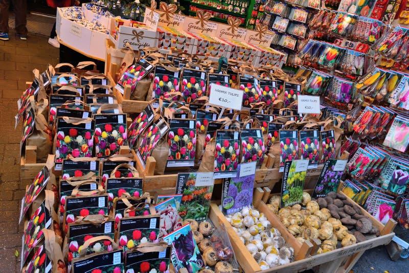 买的传统阿姆斯特丹郁金香种子 库存照片