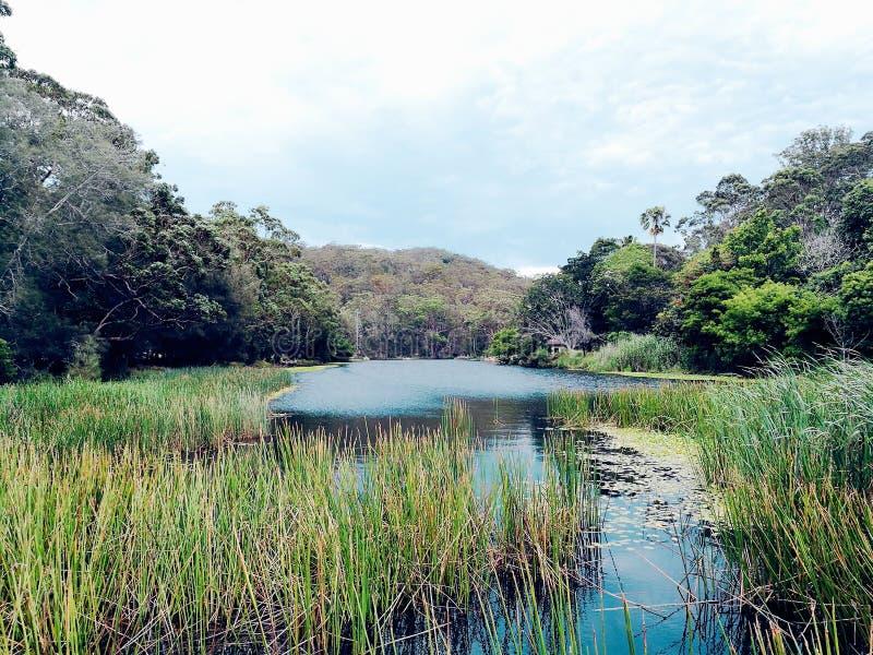 乱砍河@皇家国家公园,悉尼 免版税图库摄影