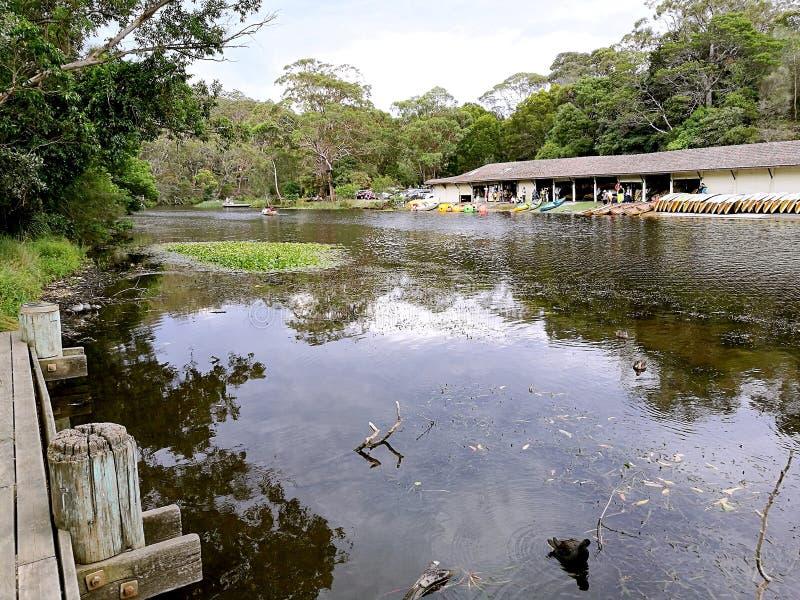 乱砍河@皇家国家公园,悉尼 免版税库存图片