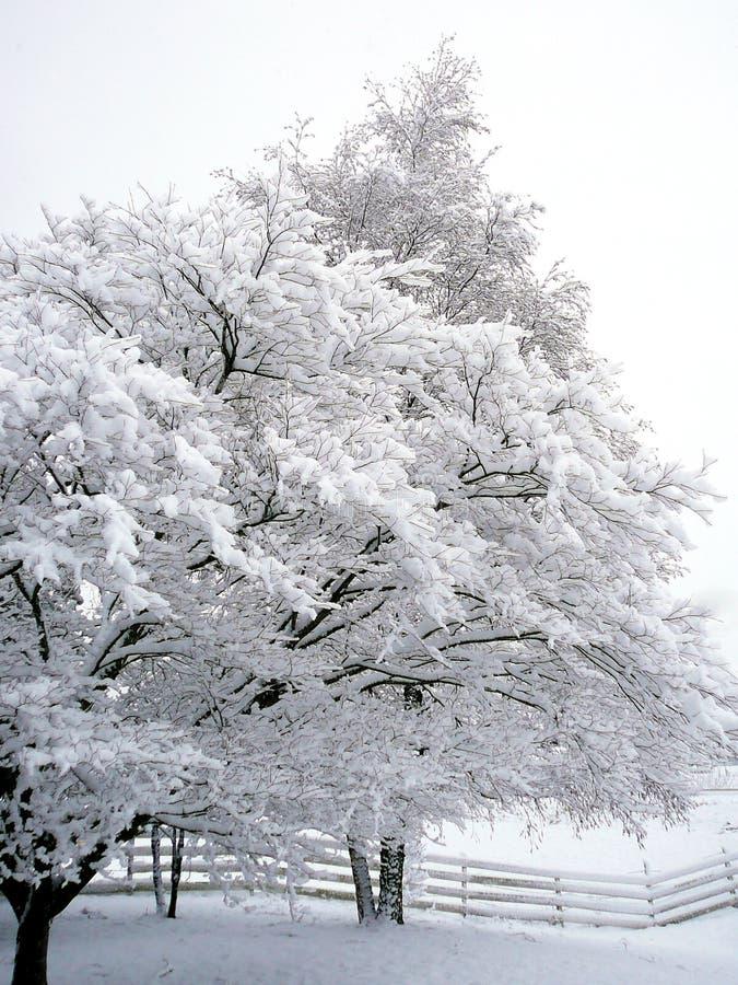 乳白天空 库存图片