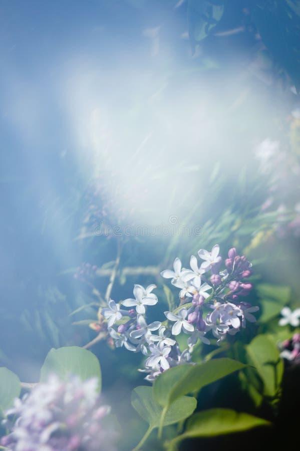 乳草在有天空反射的森林里从棱镜 免版税库存图片