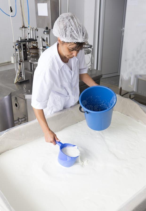 乳酪生产乳脂制造厂牛奶店工作者 免版税图库摄影