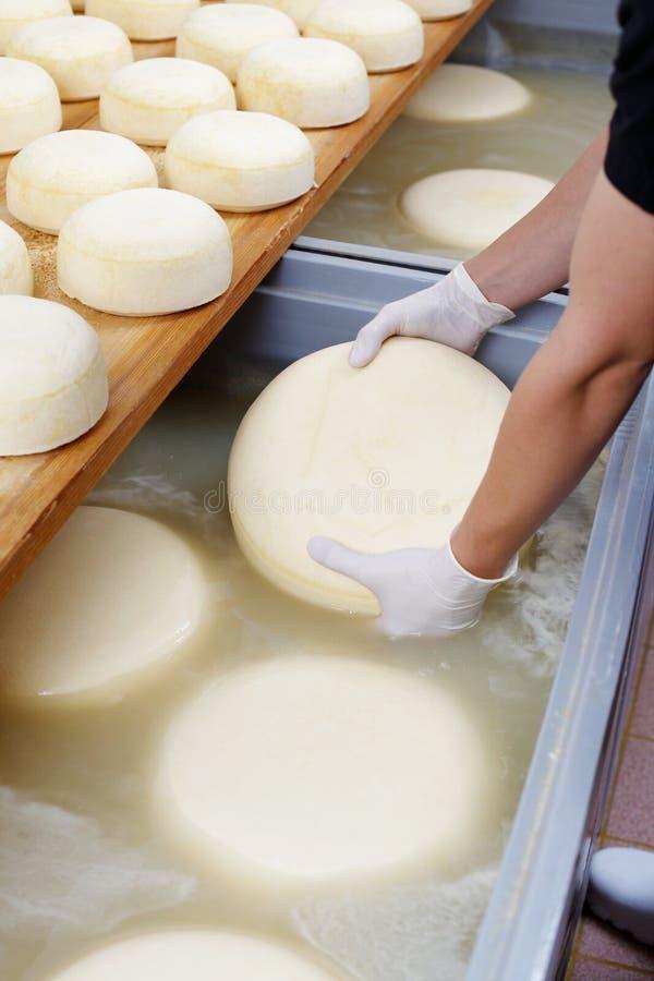 乳酪过程 库存图片