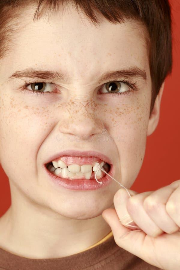 乳齿 免版税库存照片