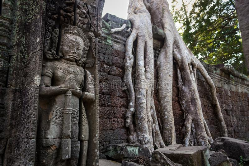了不起的监护人 在吴哥窟树和密林内废墟接管了整个大厦 prohm收割siem ta 柬埔寨 免版税图库摄影