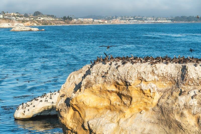 了不起的群鹈鹕和鸬鹚在峭壁上面 库存照片