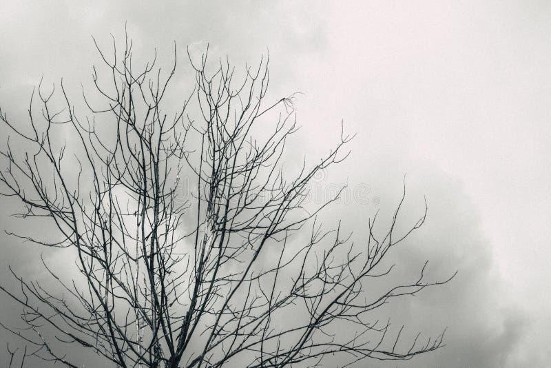 死了与多云神色恐怖偏僻的天空的树 图库摄影