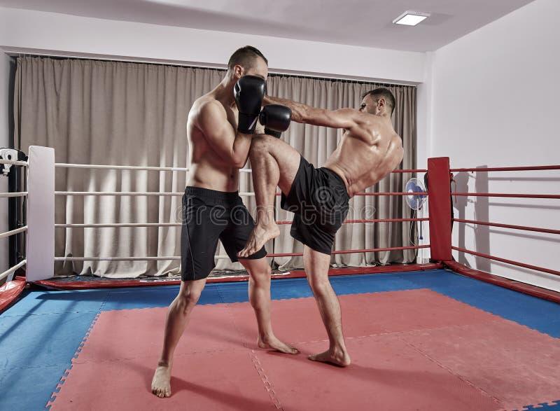 争吵在圆环的Kickboxers 库存照片