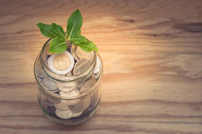 事务和财政概念:生长通过金钱的绿色sprount树在储款金钱玻璃瓶子铸造 免版税库存照片