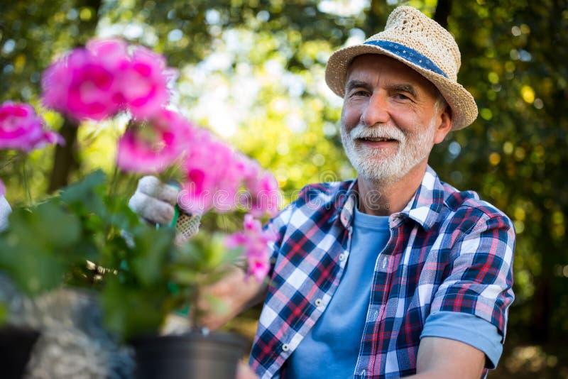 从事园艺在庭院里的老人 免版税库存照片