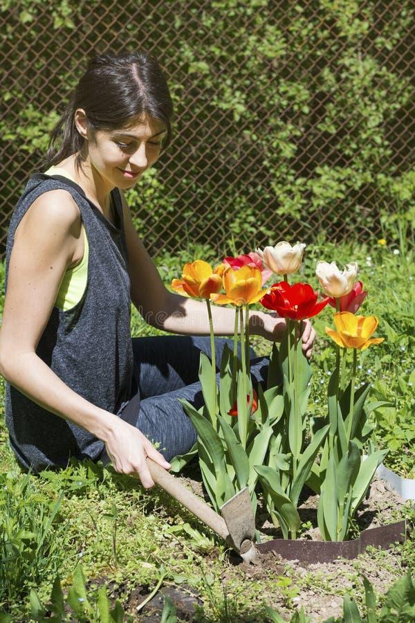 从事园艺在有开花的郁金香的春天庭院里的妇女 库存图片