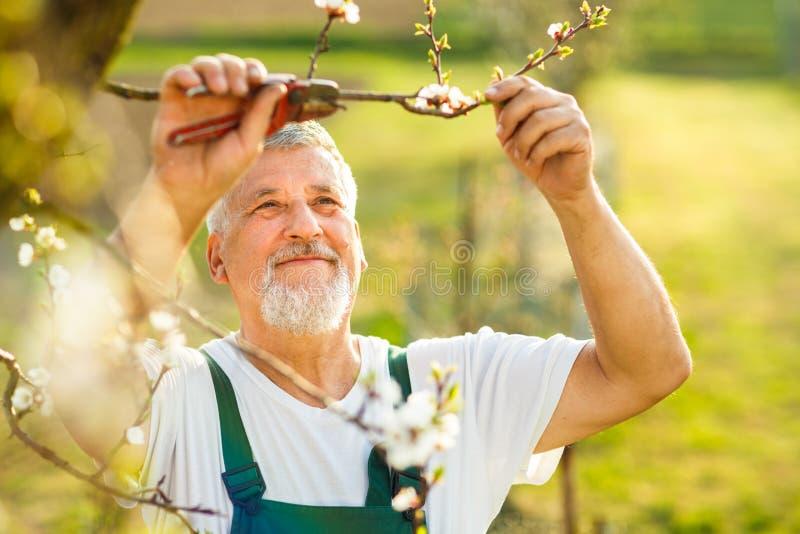 从事园艺在他的庭院里的一名英俊的老人的画象 免版税库存照片