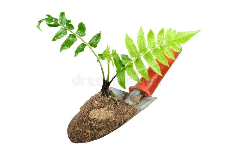 从事园艺的修平刀和植物孤立的。 免版税库存照片