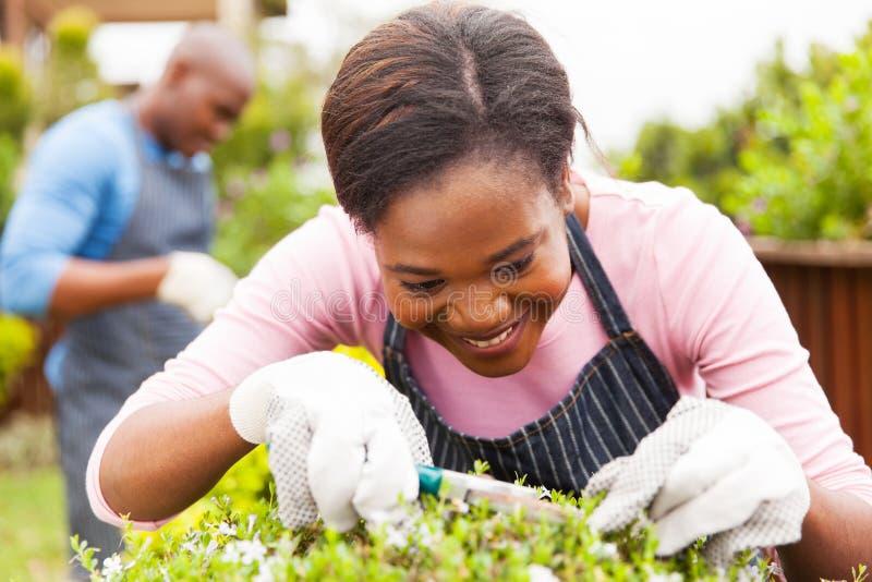 从事园艺的妇女在家 免版税库存照片