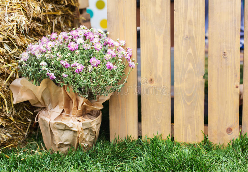从事园艺,木篱芭在绿色春天庭院里 免版税库存照片