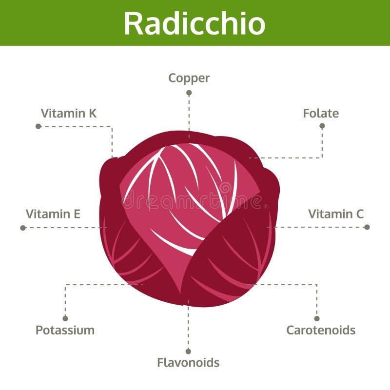 事实和保健福利,信息图表拉迪基奥营养素  库存例证