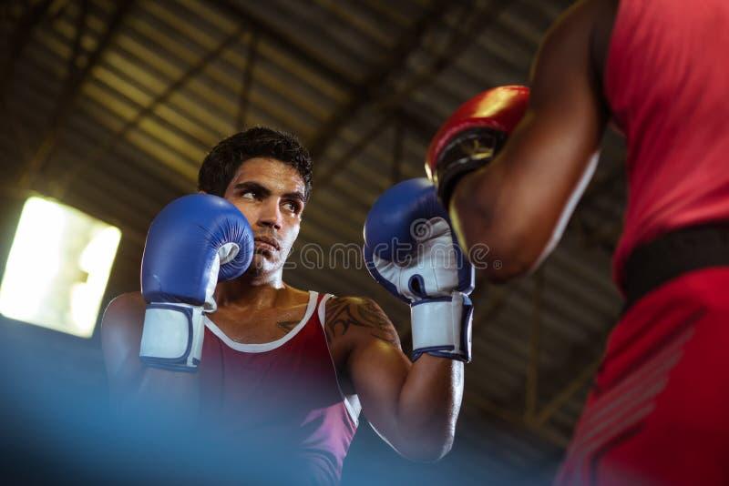 二个在拳击台的男性运动员战斗 免版税库存照片