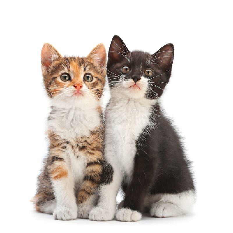 二只小猫开会 免版税库存照片