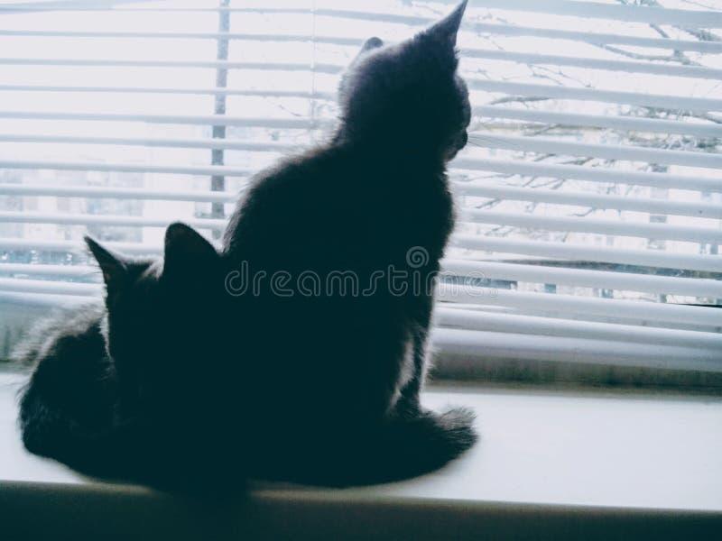 二只小的猫 免版税库存照片