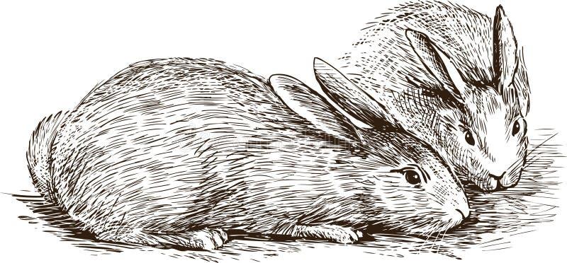 二只兔子 库存例证