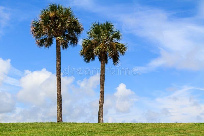 二棵棕榈树 免版税库存图片