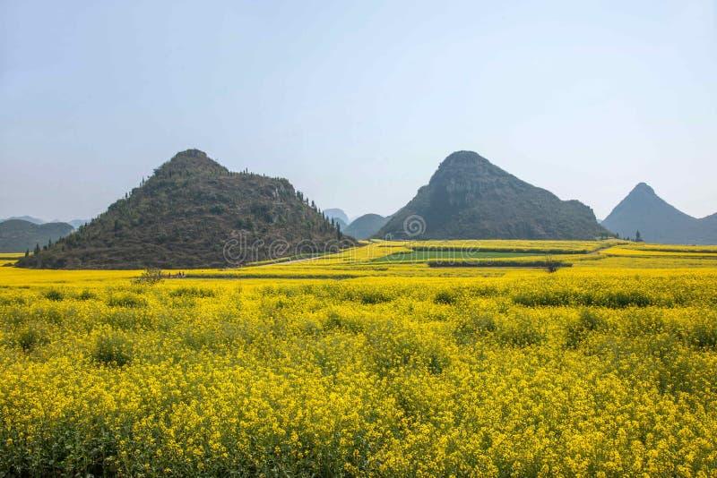 云南罗平在花Bazi一个小补丁的油菜花  免版税图库摄影