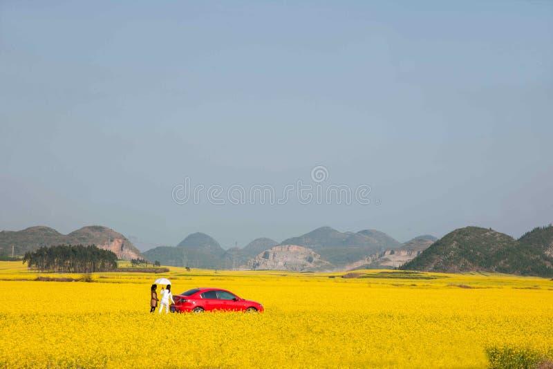 云南罗平在花Bazi一个小补丁的油菜花  库存照片