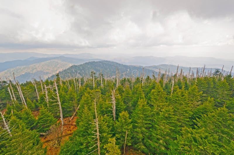 云彩和杉木在山里奇 免版税库存图片