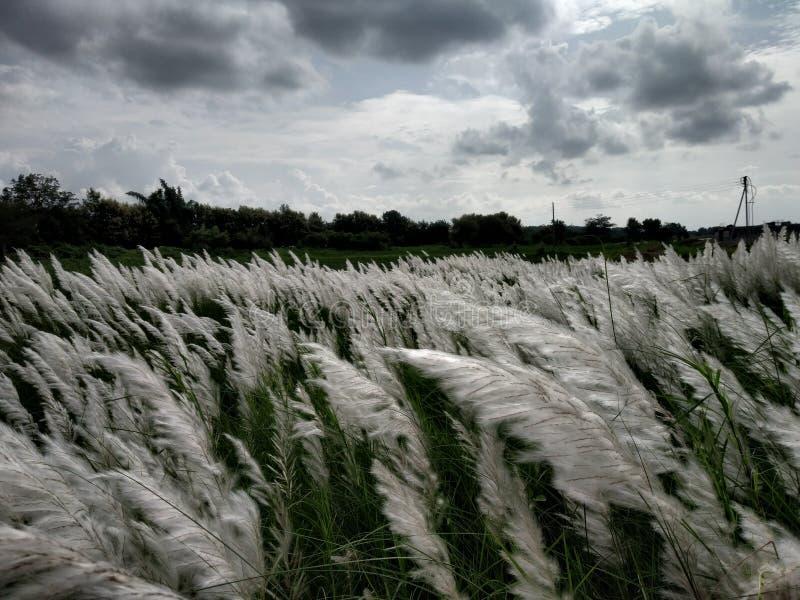 云彩和白色开花自然美人  免版税库存照片
