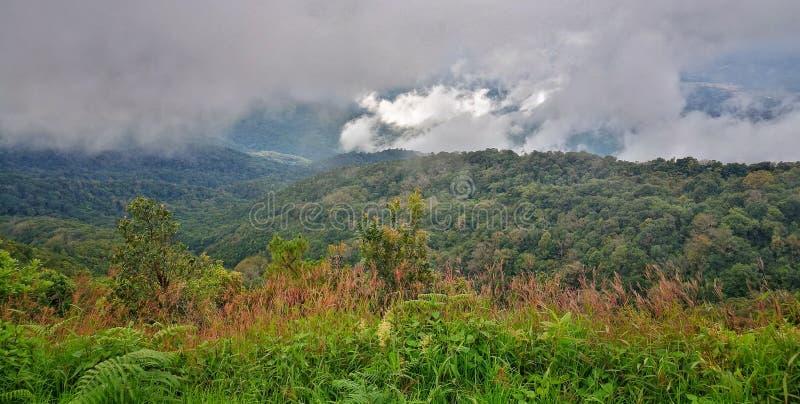 云彩森林,土井Inthanon国家公园,清迈 库存照片