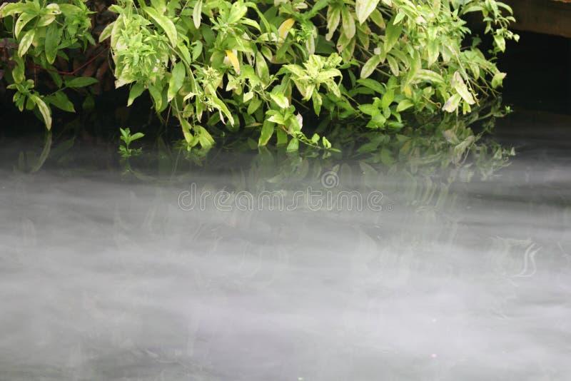 云彩森林 图库摄影