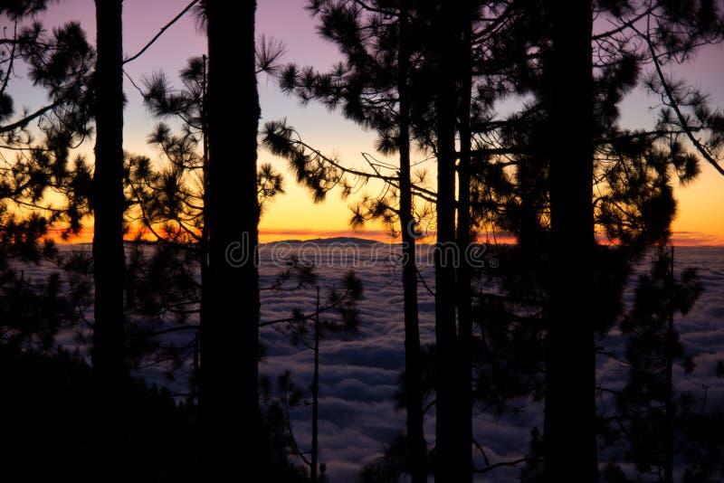 云彩海和森林剪影 免版税图库摄影