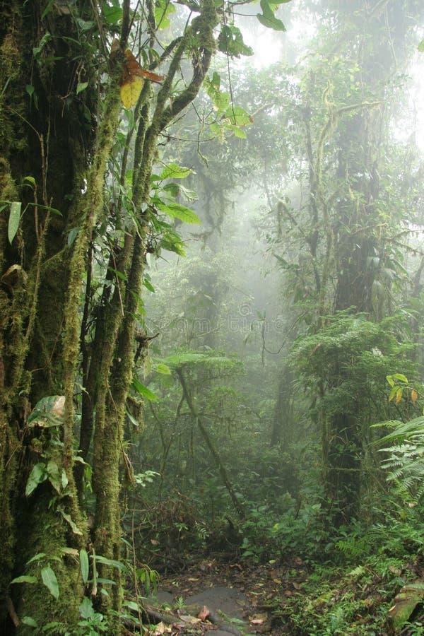 云彩肋前缘森林monteverde自然保护ri 免版税库存照片