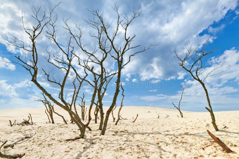 云彩离开蓝天沙子绿洲光秃的树 免版税库存图片
